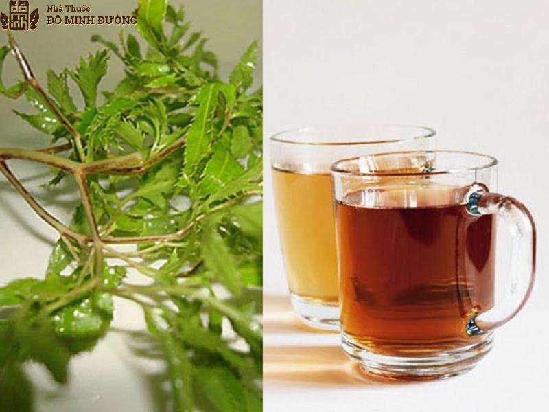 Uống nước sắc đinh lăng chữa thoái hóa cột sống cổ hiện quả