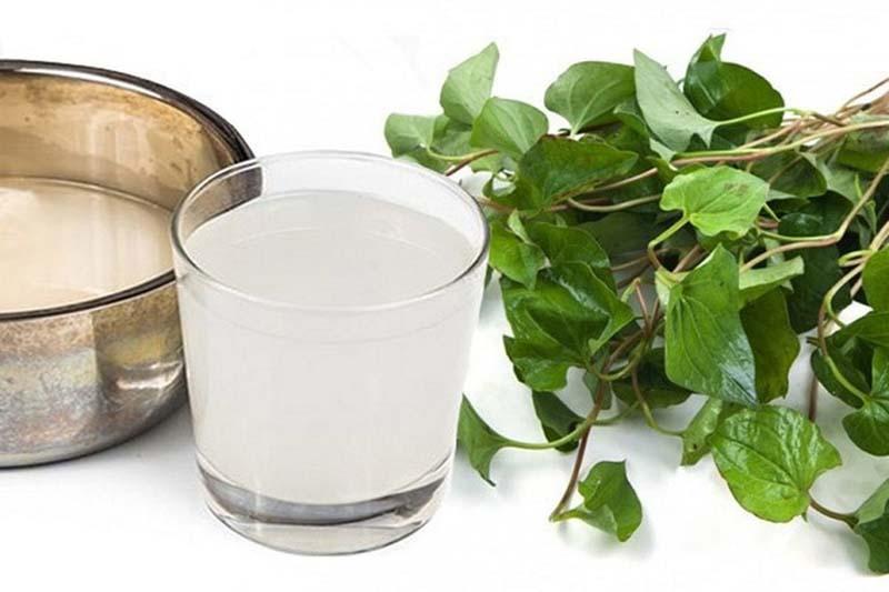 Bài thuốc chữa viêm xoang bằng rau diếp cá và nước vo gạo