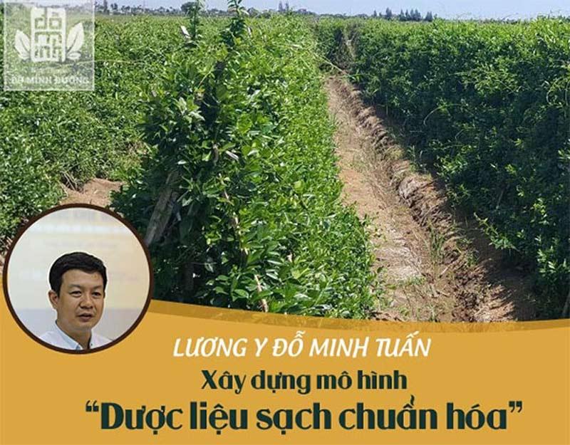 Vườn thảo dược sạch của Đỗ Minh Đường - nơi ươm trồng hơn 100 cây thuốc quý