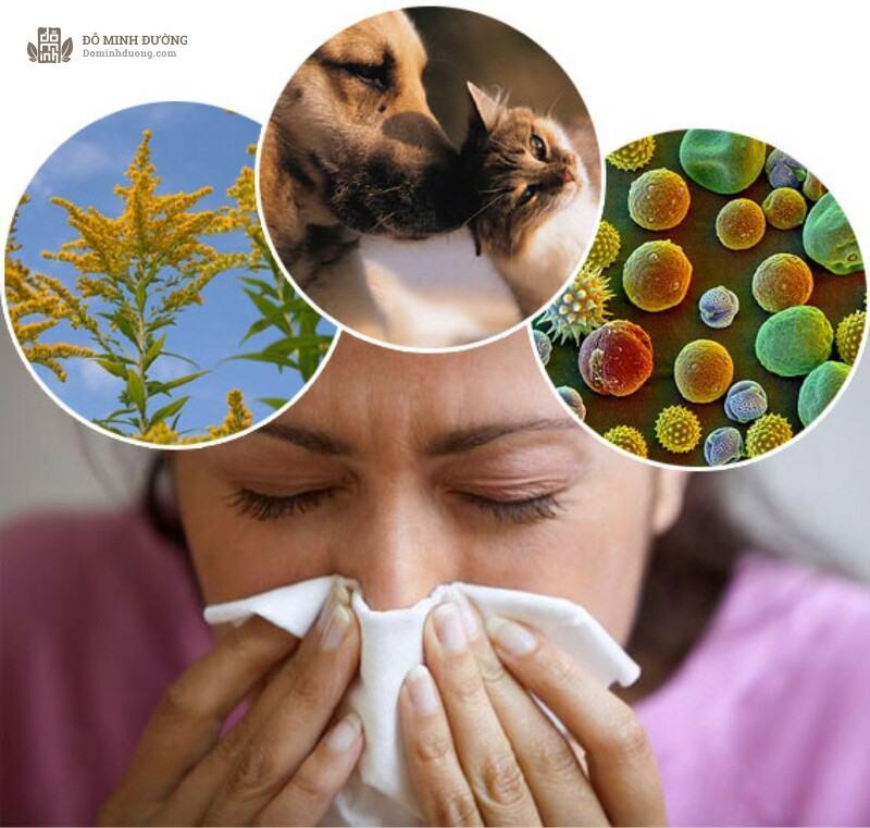Tránh xa dị nguyên cách giúp làm giảm triệu chứng viêm mũi dị ứng hiệu quả