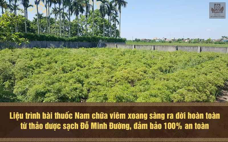 Vườn trồng thảo dược sạch cung cấp cho thuốc điều trị