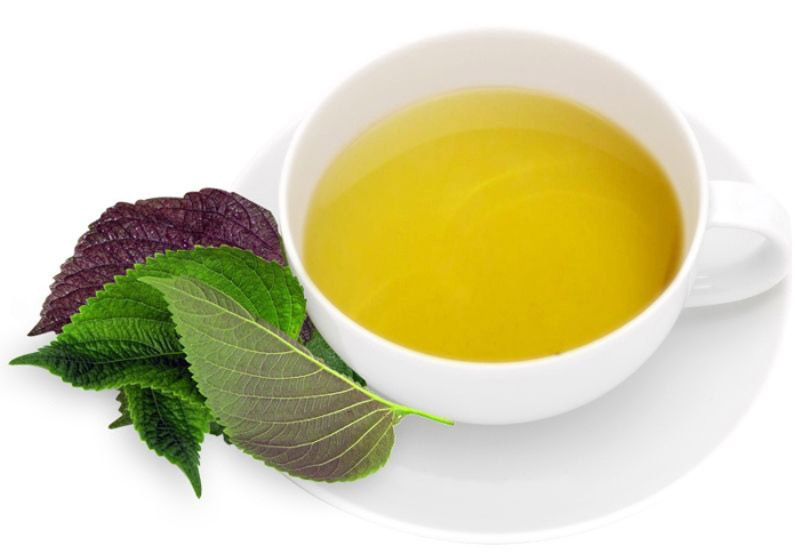 Trà tía tô có tác dụng thanh nhiệt, giải độc, thích hợp với những người bị mề đay mãn tínhnh nhiệt