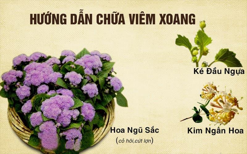 Kết hợp hoa ngũ sắc với một số thành phần thảo dược khác để loại bỏ viêm xoang