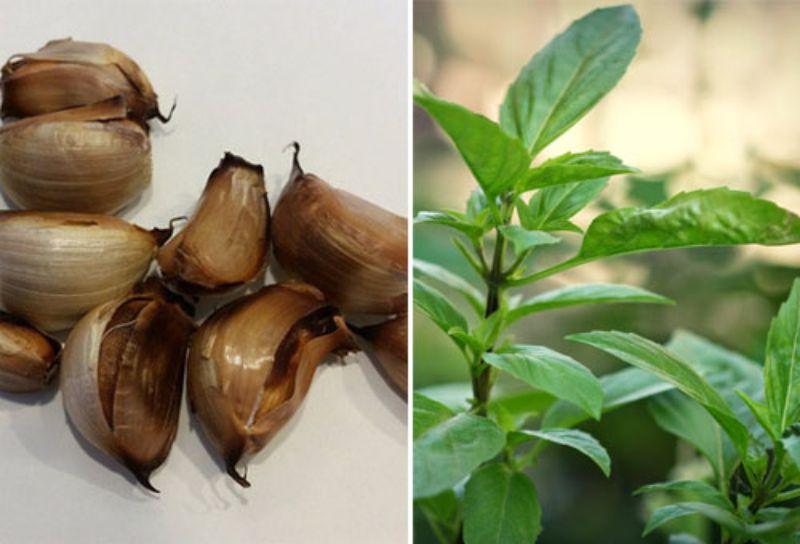 Bài thuốc trị sổ mũi từ lá húng quế và tỏi nướng