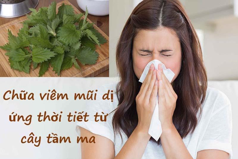 Dùng cây tầm ma là phương pháp chữa viêm mũi dị ứng thời tiết tại nhà hiệu quả