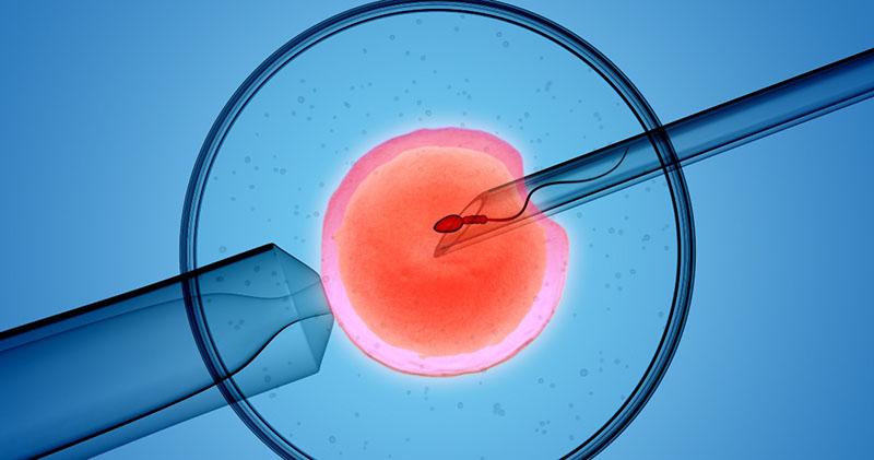 Thụ tinh trong ống nghiệm là phương pháp chữa trị vô sinh phổ biến