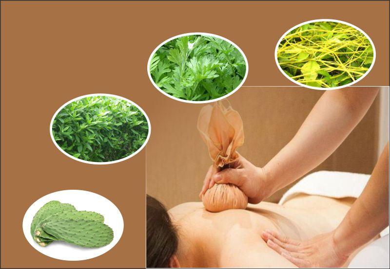 Xương rồng kết hợp với một số thảo dược khác sẽ phát huy tác dụng chữa đau lưng