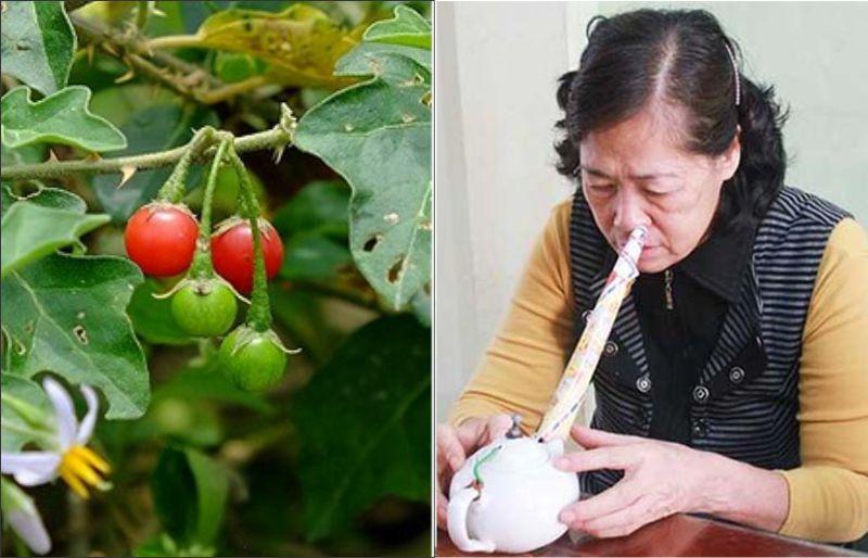 Cách chữa viêm mũi dị ứng từ cây cà gai leo