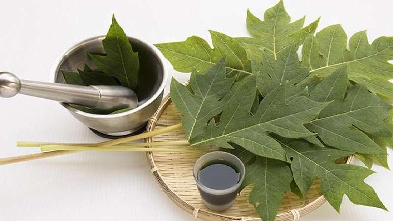 Chữa viêm họng bằng lá đu đủ, lá hẹ và hạt chanh
