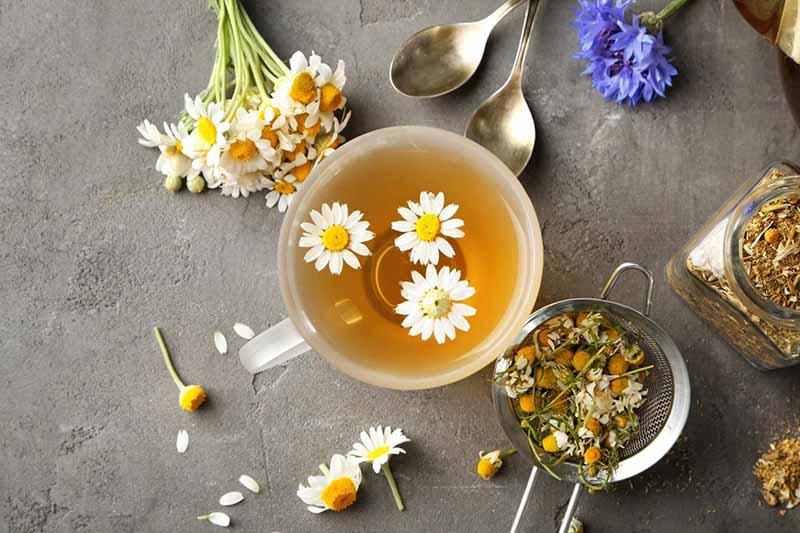 đau họng uống gì? uống trà hoa cúc