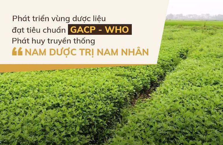 Cận cảnh vườn dược liệu của nhà thuốc tại các tỉnh Hòa Bình, Hưng Yên và Hà Nội