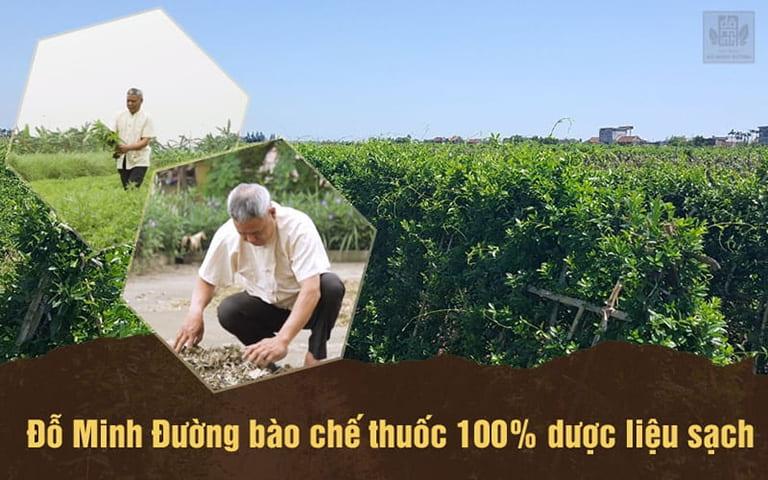 Đỗ Minh Đường sở hữu 3 vườn dược liệu sạch, đạt tiêu chuẩn GACP-WHO