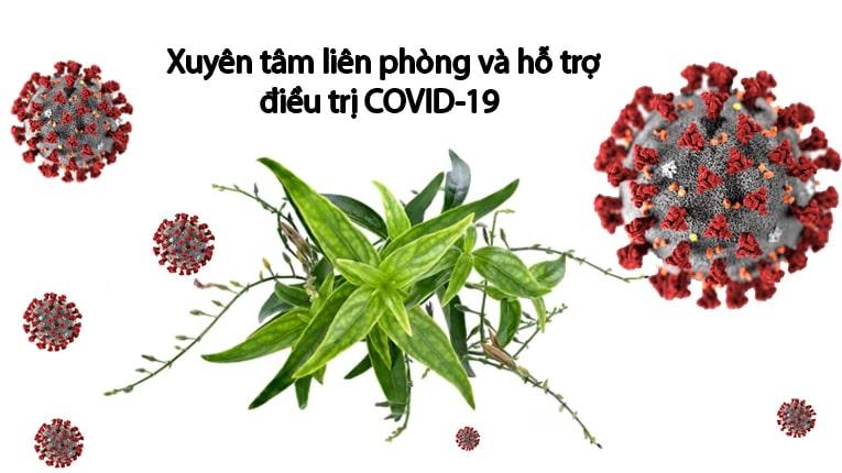 Tác dụng điều trị Covid-19 của xuyên tâm liên đã được nghiên cứu, kiểm chứng