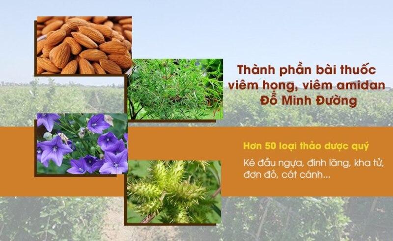 Thành phần thảo dược chính trong bài thuốc Viêm họng Đỗ Minh Đường